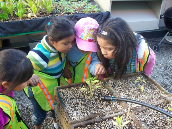 FYCC kids check out a plant as it sprouts